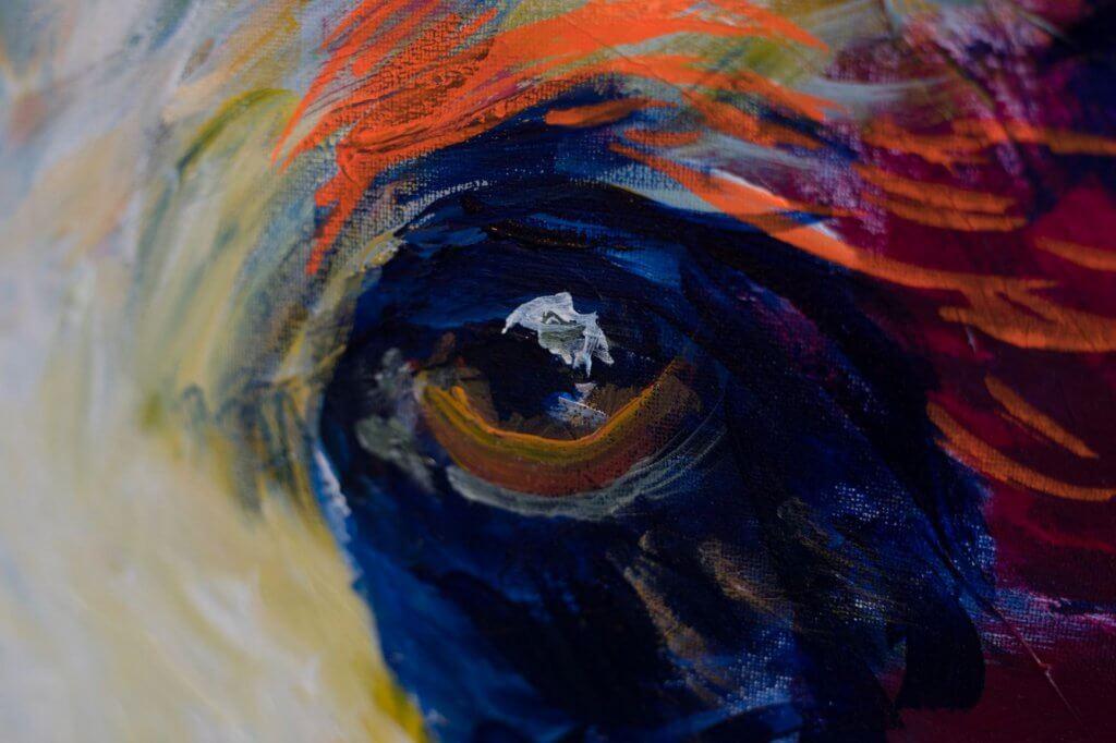 bear eye caroline hulse colourful nature